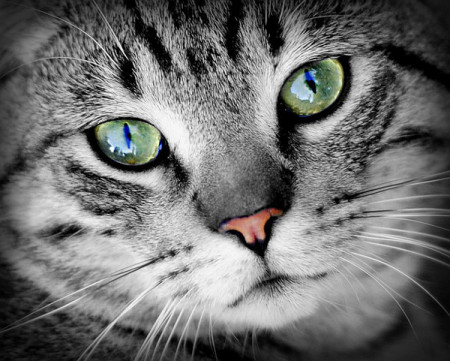 Photo of a cat's face.